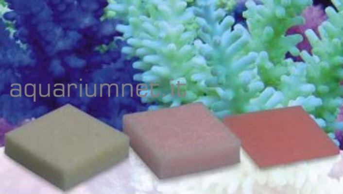 Korallen-Zucht-Automatic-Elements-Eisen-Konzentrat